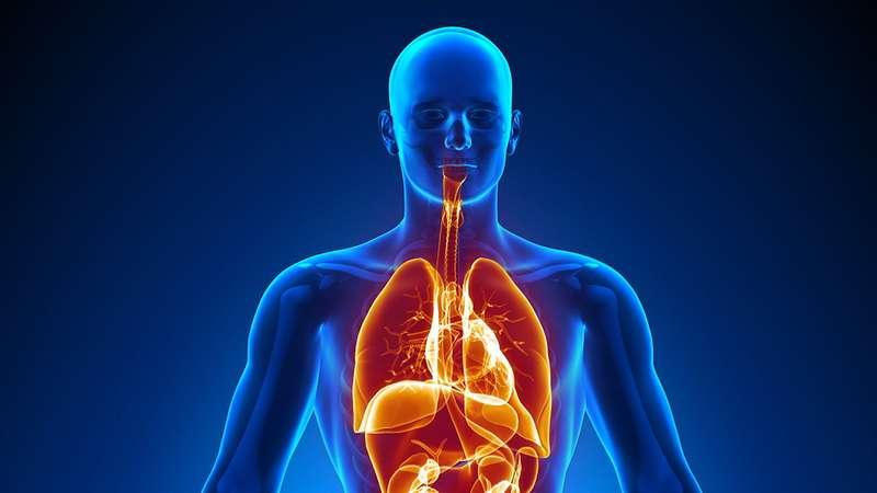 انسانی جسم۔